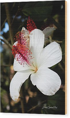 Wood Print featuring the photograph Hawaiian Hibiscus  by Joann Copeland-Paul