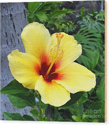 Hawaiian Hibiscus Wood Print by Sue Melvin