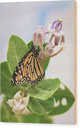Wood Print featuring the photograph Hawaiian Monarch by Heather Applegate