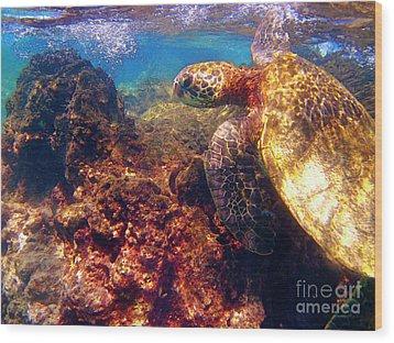 Hawaiian Sea Turtle - On The Reef Wood Print