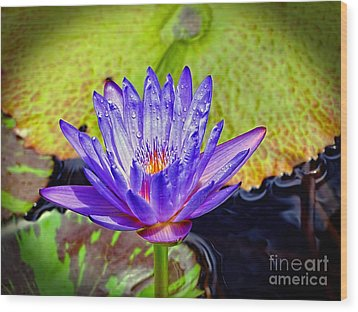 Hawaiian Water Lily Wood Print by Sue Melvin