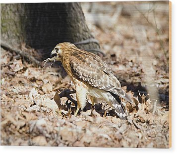 Hawk And Gecko Wood Print by George Randy Bass