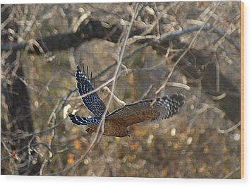 Wood Print featuring the photograph Hawk In Flight by Rick Friedle