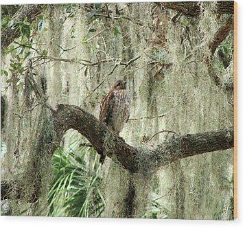 Hawk In Live Oak Hammock Wood Print by Peg Urban