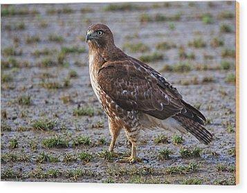 Hawk On A Walk Wood Print by Randall Ingalls