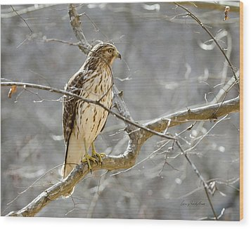 Hawk On Lookout Wood Print by George Randy Bass