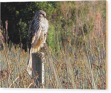 Hawk On Post Wood Print