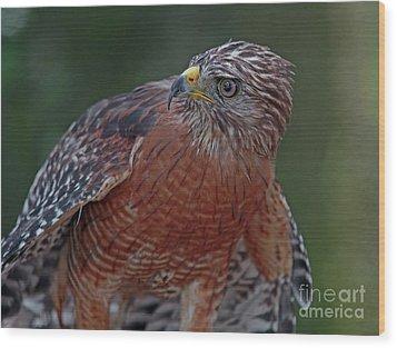 Hawk Portrait Wood Print by Larry Nieland