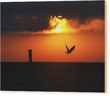 Hawk Rising With The Sun Wood Print by Clarice  Lakota