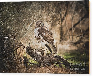 Hawk Through A Thicket Wood Print by Robert Frederick