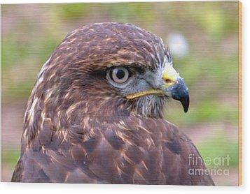 Hawks Eye View Wood Print
