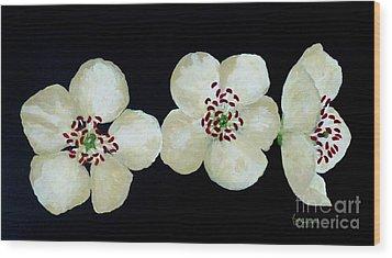 Hawthorn Flowers Wood Print
