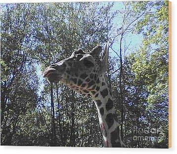 Head Giraffe Wood Print by Daniel Henning