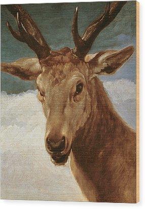 Head Of A Stag Wood Print by Diego Rodriguez de Silva y Velazquez