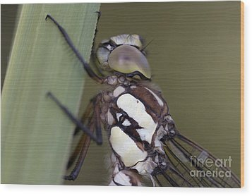 Head Of The Dragon-fly Wood Print by Michal Boubin