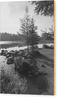 Headwaters Pine Wood Print by Christopher J Franklin