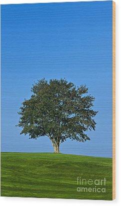 Healthy Tree Wood Print by John Greim