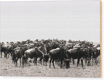 Herd Of Wildebeestes Wood Print