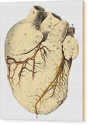 Heart Anatomy, 18th Century Wood Print by