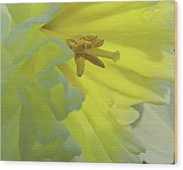 Wood Print featuring the photograph Heart Of Daffodil by Larry Bishop