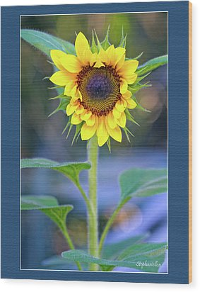 Heart Shaped Sunflower Wood Print by Stephanie Hayes