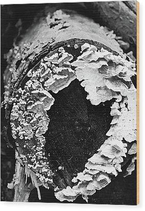 Heart Toadstool Wood Print