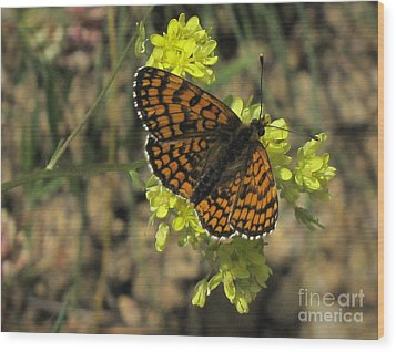 Wood Print featuring the photograph Heath Fritillary Butterfly  by Jacqi Elmslie