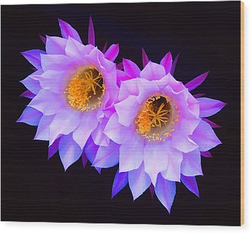 Hedgehog Cactus Flower Wood Print