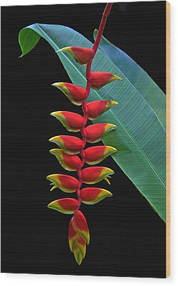 Heliconia Wood Print by Larry Linton