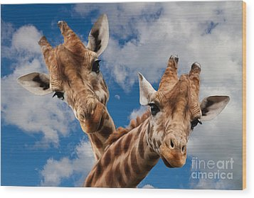 Wood Print featuring the photograph Hello by Christine Sponchia