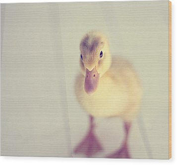 Wood Print featuring the photograph Hello Ducky by Amy Tyler