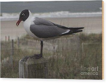 Hello Friend Seagull Wood Print