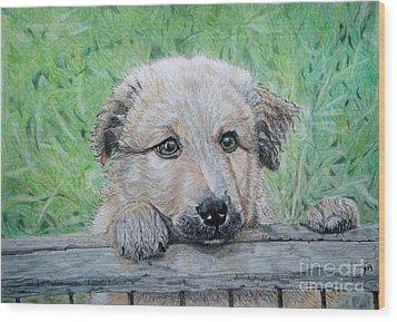 Hello Puppy Wood Print by Yvonne Johnstone