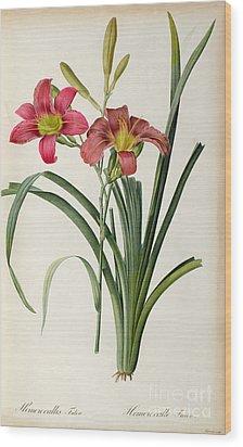 Hemerocallis Fulva Wood Print by Pierre Joseph Redoute