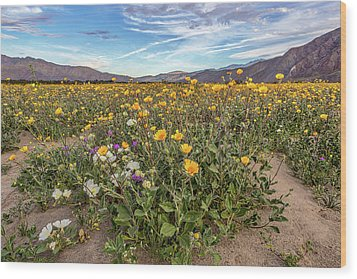 Wood Print featuring the photograph Henderson Canyon Super Bloom by Peter Tellone