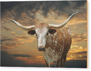 Henly Longhorn Wood Print