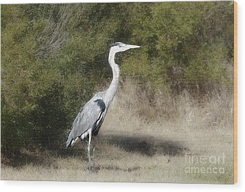 Wood Print featuring the photograph Henry The Heron by Benanne Stiens