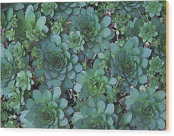 Hens And Chicks - Digital Art  Wood Print by Sandra Foster