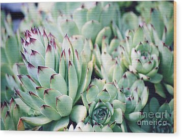 Hens And Chicks Plant Wood Print
