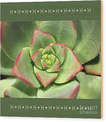 Hens And Chicks Succulent And Design Wood Print by Joy Watson