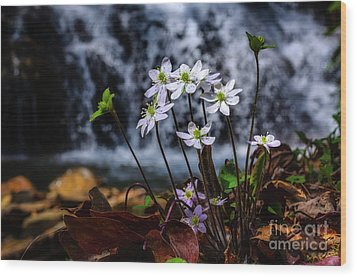 Wood Print featuring the photograph Hepatica And Waterfall by Thomas R Fletcher