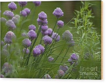 Herb Garden. Wood Print