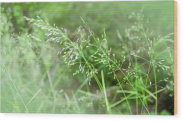 Herbs Close Up Wood Print