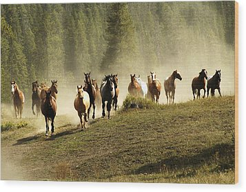 Herd Of Wild Horses Wood Print