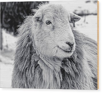 Wood Print featuring the photograph Herdwick Sheep by Keith Elliott