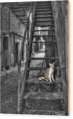 Here Kitty Kitty Kitty... Wood Print by Evelina Kremsdorf