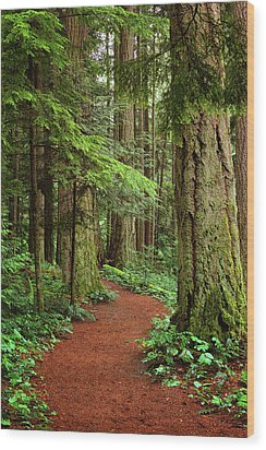 Heritage Forest 2 Wood Print by Randy Hall