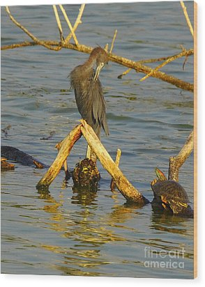 Heron And Turtle Wood Print by Robert Frederick