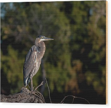 Heron At Sunrise Wood Print by Martina Thompson