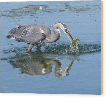 Great Blue Heron Catches A Fish Wood Print